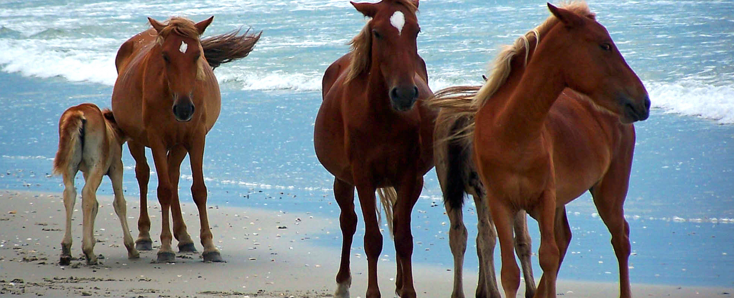 outer banks horse tours