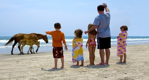 Family with wild horses on the Outer Banks