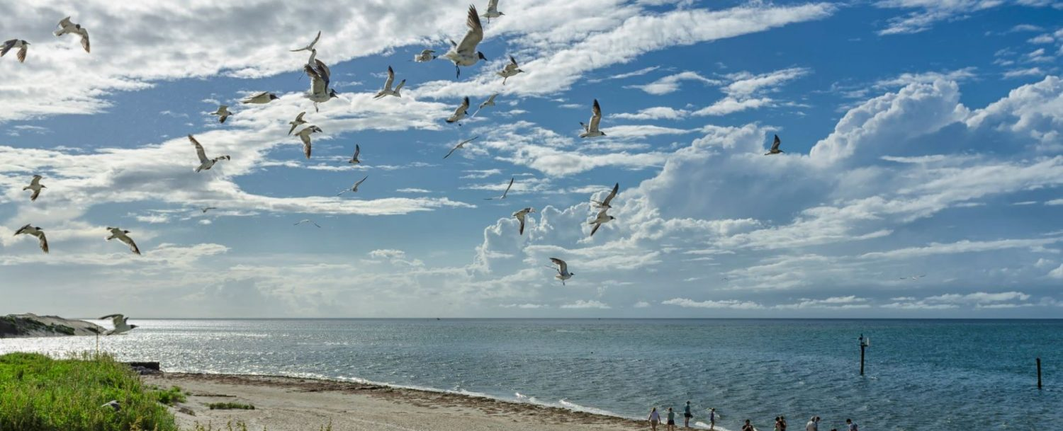 Ocracoke Island birds flying