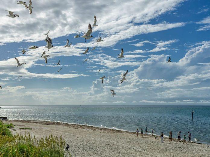Ocracoke Island birds flying